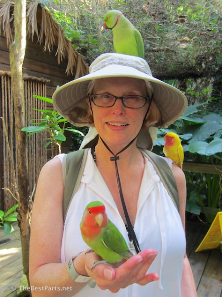 Dolphin Cove birdy Gail