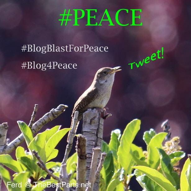 House Wren Peace Globe